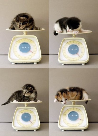 New Kittens Being Weighed