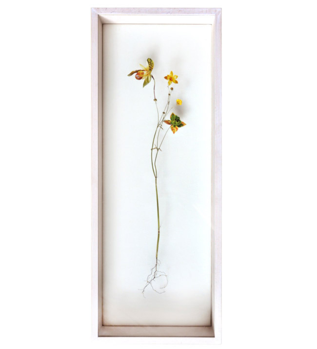 Anne Ten Donkelaar Flower constructions