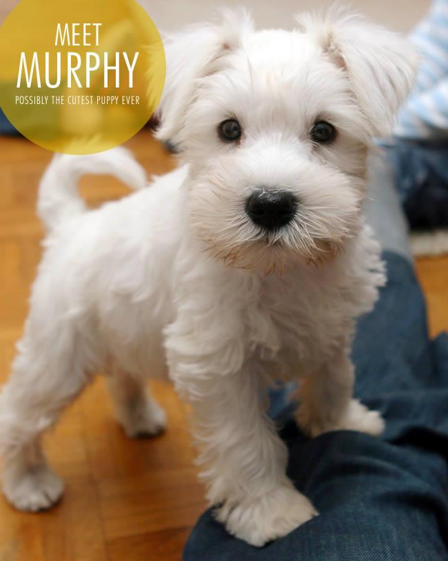 Meet Murphy