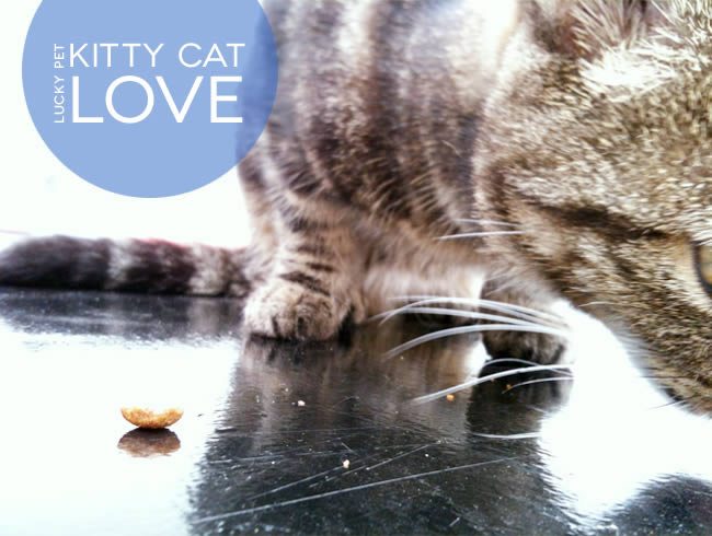 Lucky Pet Love