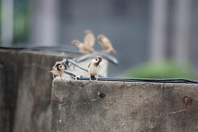 Google_birdhouse10