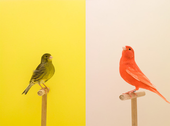 Luke Stephenson - The Incomplete Dictionary of Show Birds