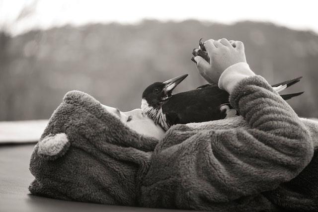 Magpie Rescue